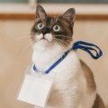 Catsname